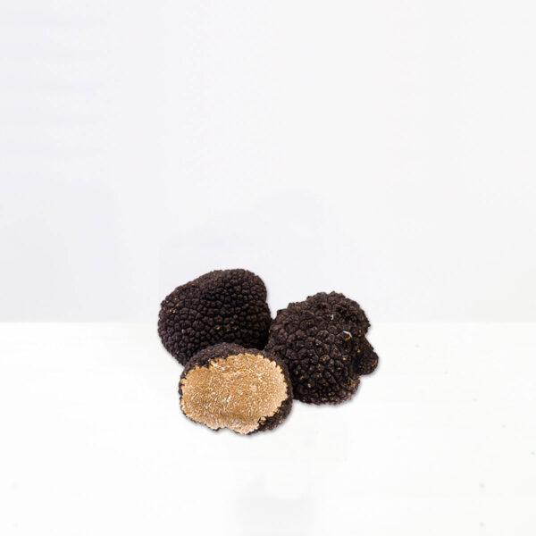 tartufo-nero-estivo-scorzone-tartufeltro-tartufo-alta-qualità-montefeltro